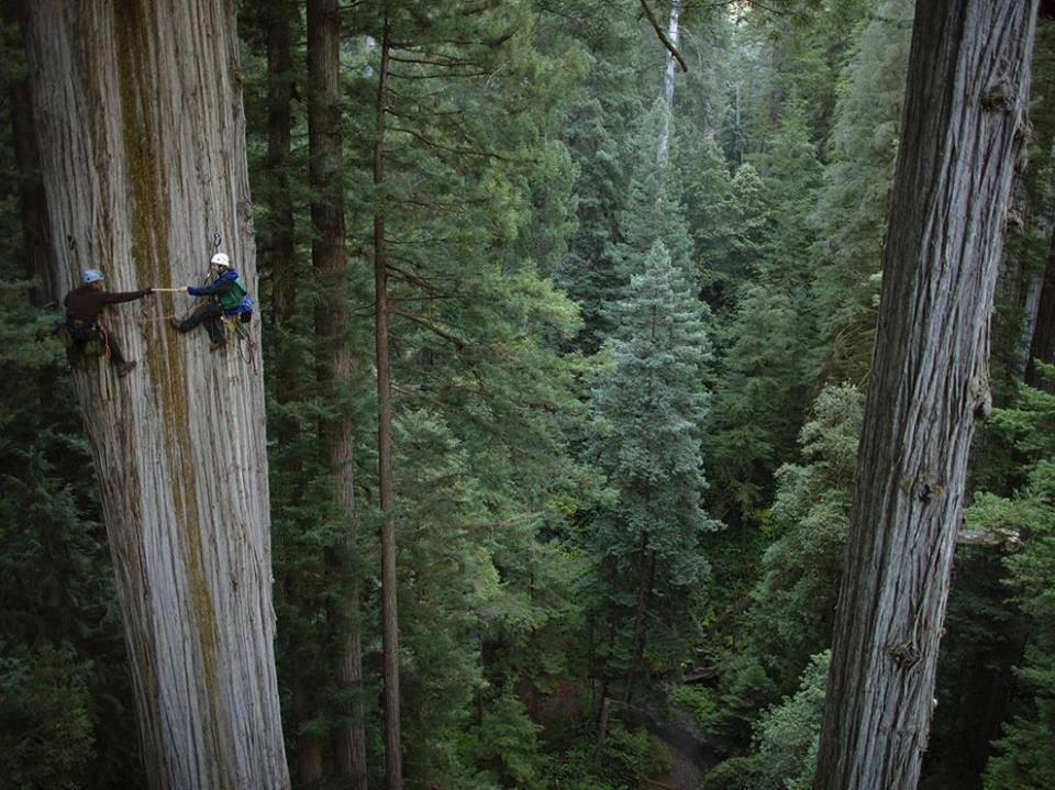 若世界爷没有这麼多夥伴共聚一起,就不可能成为巨木,所以要形成巨树