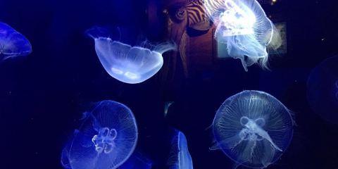 摩納哥海洋館