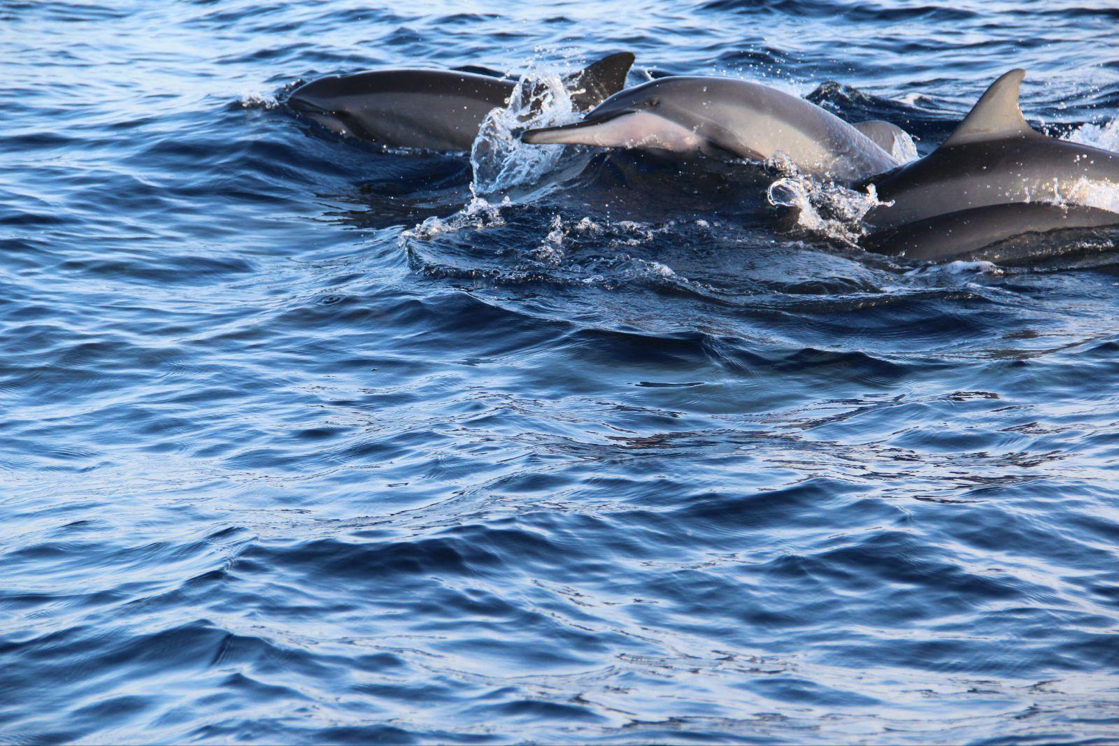 第一次看到在海里游的海豚,实在是太喜欢它们.