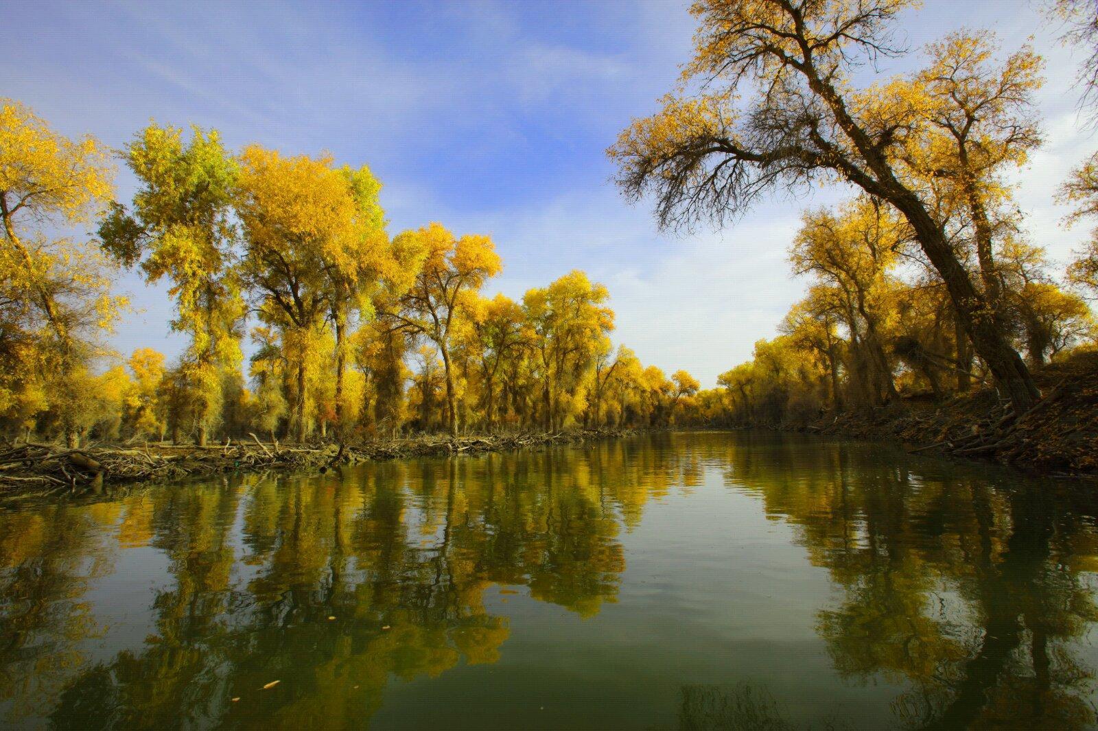 塔里木胡杨林国家森林公园集塔河自然景观