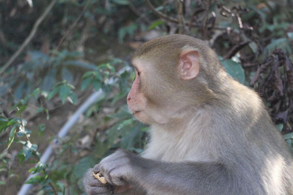 牛姆林实际上应该是挺大的,但小孩子一心只想着喂猴子,所以好多地方图片
