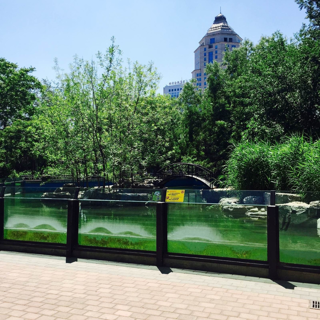 仲夏独游北京动物园