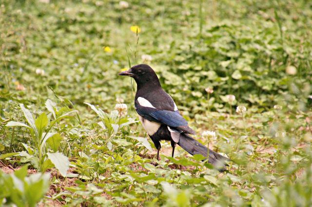 园内动物种类齐全,有兽类,鸟类,两栖类和爬行类动物,庞大的动物种群