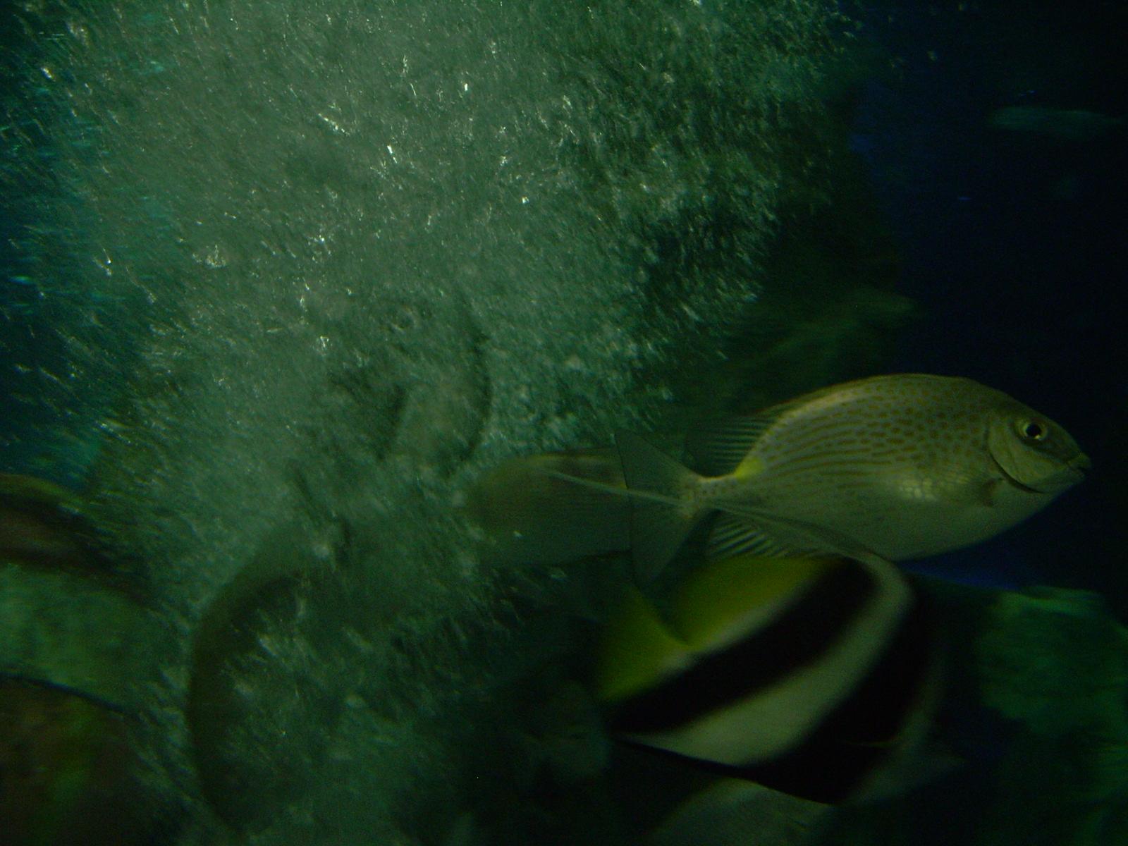 太平洋海底世界的最精华部分是海底隧道,太平洋海底世界里的海底隧道