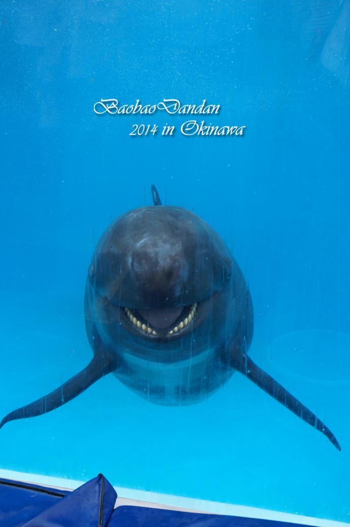 鲸鱼张嘴ps素材