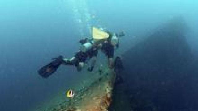 电脑壁纸海底贝壳