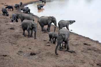 动物的王国 - 肯尼亚游记攻略【携程攻略】