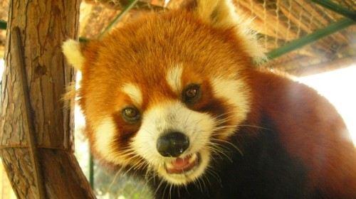 九峰森林动物园门票,武汉九峰森林动物园攻略/地址