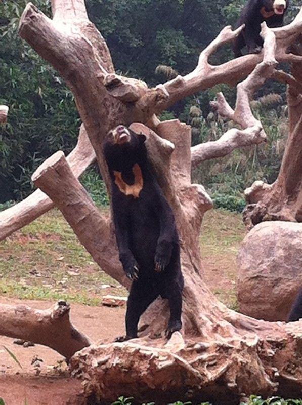 长隆香江野生动物园是亚洲最大的动物园