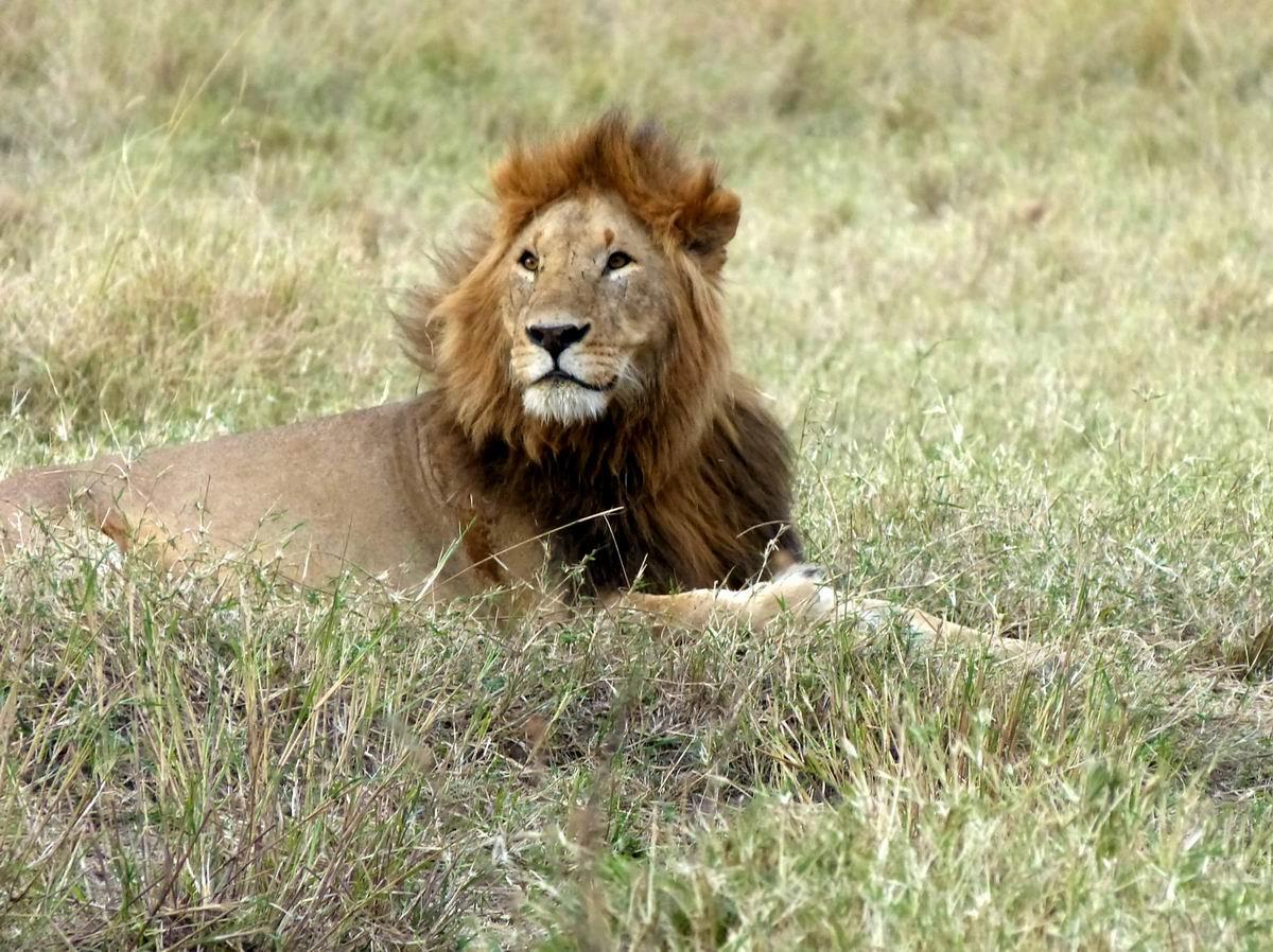 """堪称肯尼亚野生动物园的""""王中王"""""""