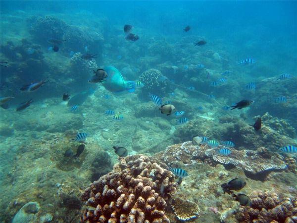 《三亚开心海洋旅游》带你超值分界洲岛一日游