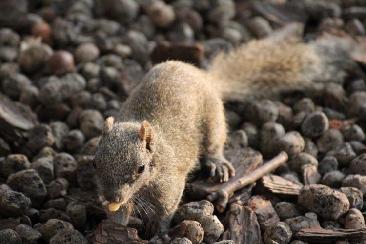 与其他亲缘关系接近的动物又被合称为松鼠形亚目.