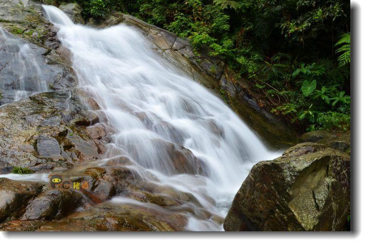 森林瀑布100眼镜蛇