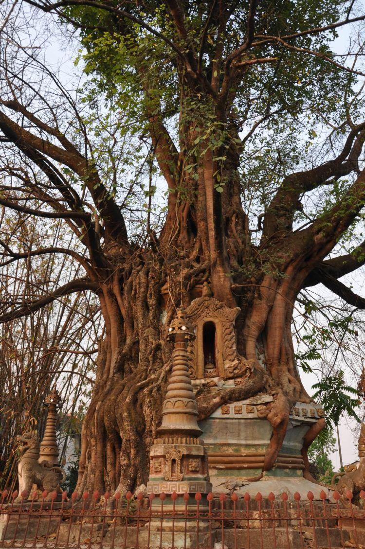 太阳树木山水塔