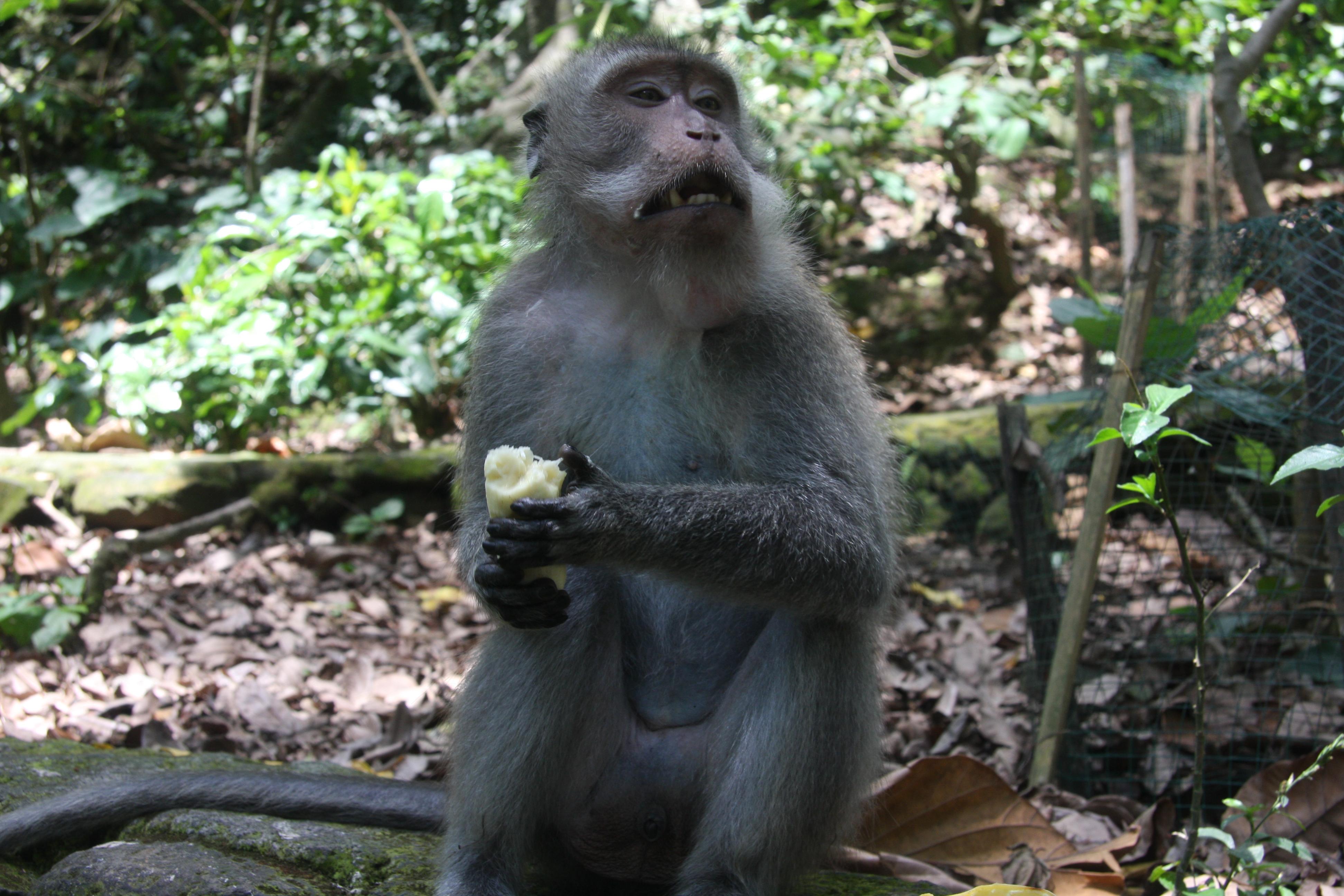 东南亚丛林动物跗猴高清壁纸