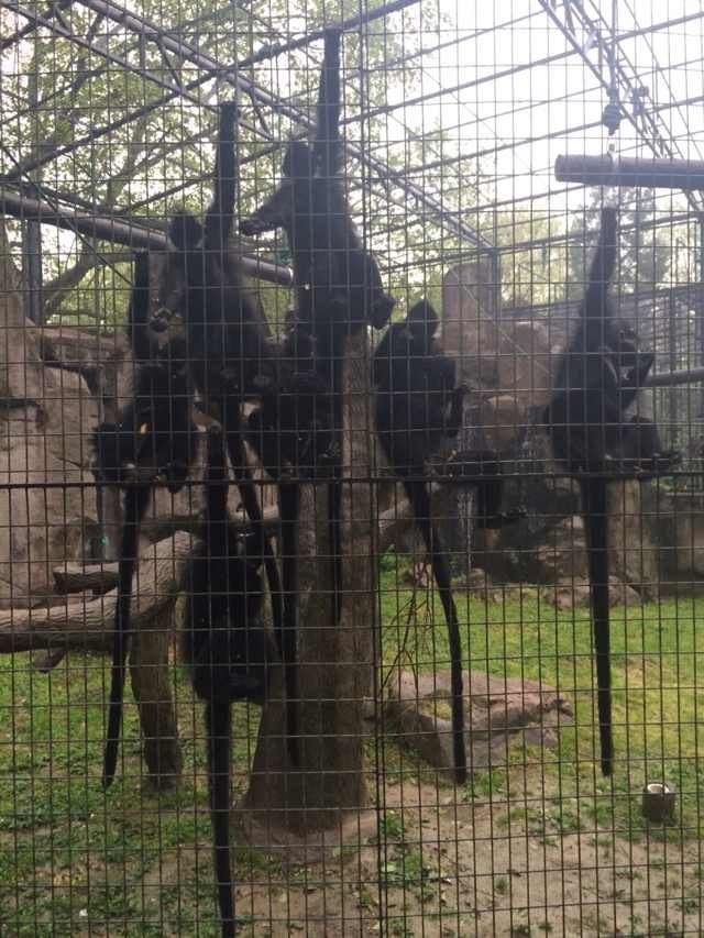 上海动物园 猩猩猴子等灵长类动物是在游园快结束的