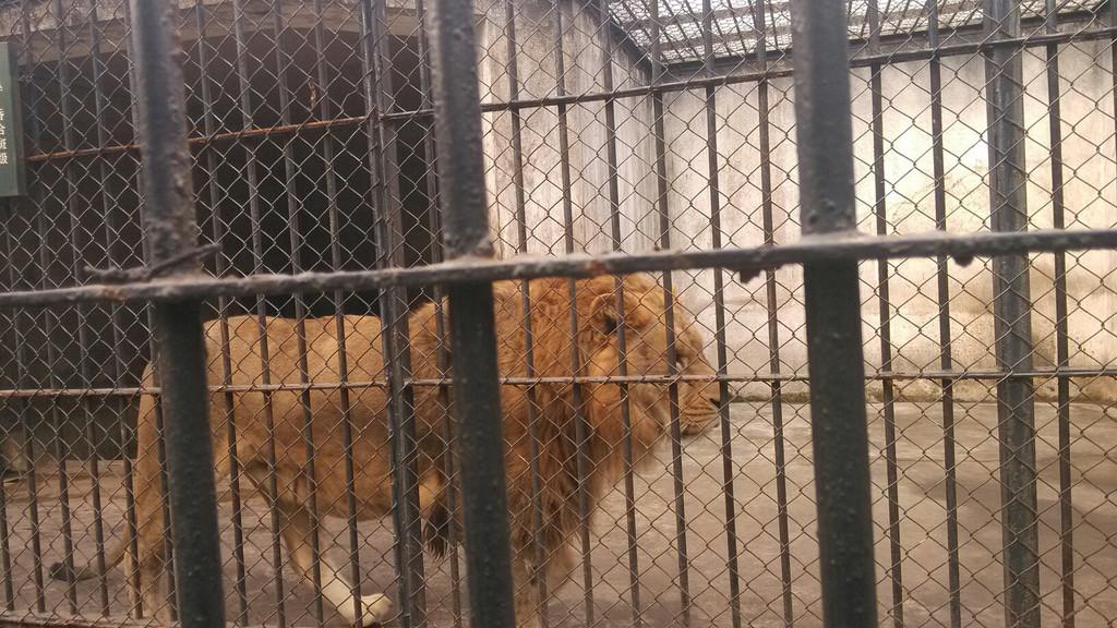 南通动物园的动物.