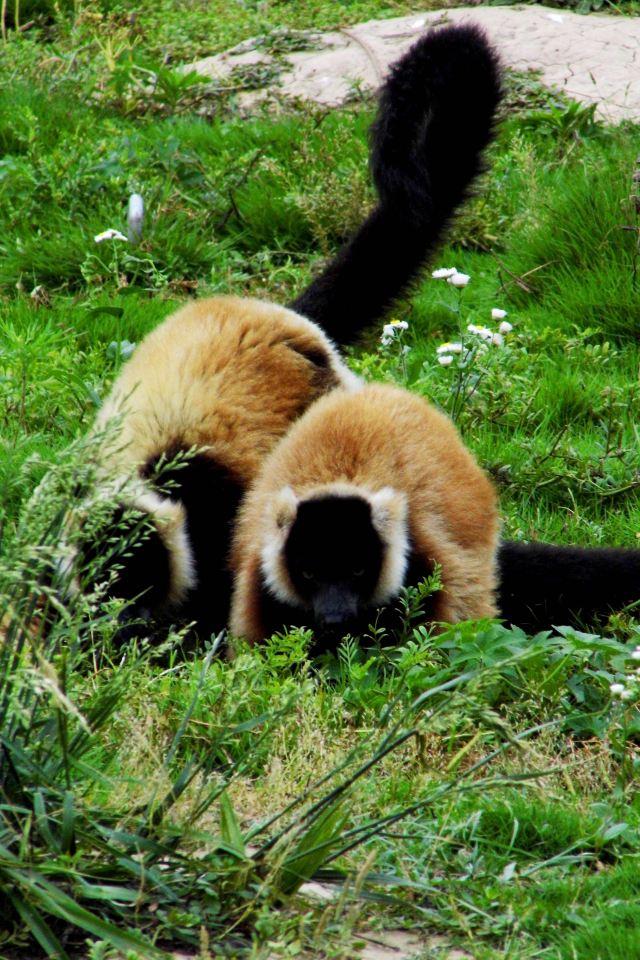 整个园区分为食草动物放养区