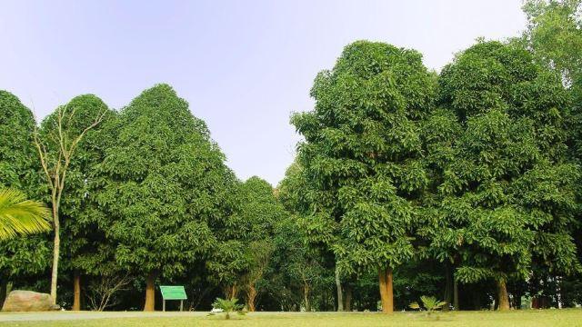 树 榕树 640_360