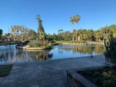 皇家植物园-悉尼-多多