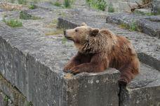 伯尔尼熊公园-伯尔尼