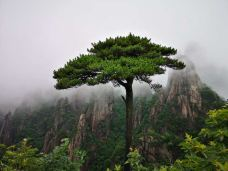 万寿园景区-三清山-M42****092