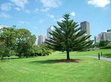皇家植物园-悉尼