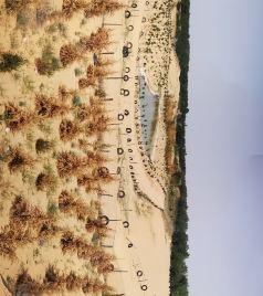 大荔游记图文-小众旅游景点~大荔金沙岛沙漠公园-南湖