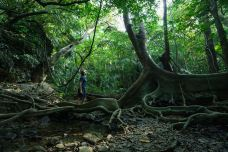 水上森林-黔南