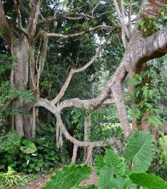 景洪游记图文-西双版纳,靠近你,温暖我,神奇的热带雨林和迷人的傣家风情