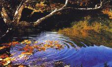 黄泥河保护区-敦化-一个大橙子