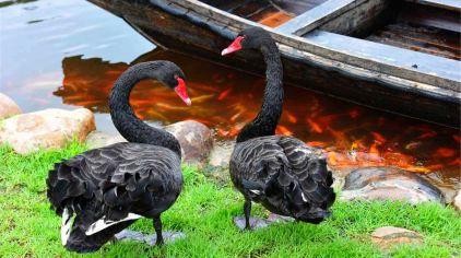 汀江国家湿地公园 (18)