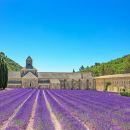 Provence Countryside Day Tour from Nice: Cannes | Grasse | Gourdon | Saint-Paul de Vence