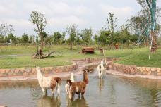 驼羊展区-南通-AIian