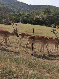 内罗毕国家公园-内罗毕-天生哥