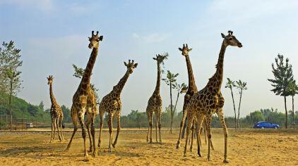 秦皇岛野生动物园 (3)