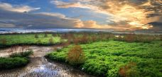 湛江红树林国家级自然保护区-雷州-iCniw