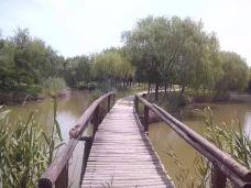 大纵湖-盐城-轻快的行走脚步