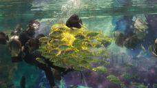小梅沙海洋世界-深圳-doris圈圈