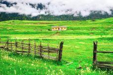鲁朗花海牧场-林芝-doris圈圈