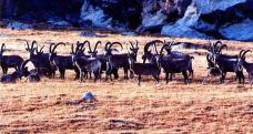 拜城县国际狩猎场-拜城-新疆旅行驿站