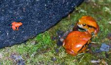 昂达西贝国家森林保护区-塔拿那利佛-juki235