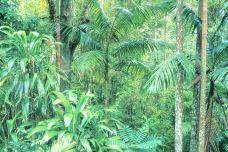 布里斯班森林公园-布里斯班-尊敬的会员