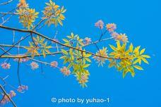 剑英公园-梅州-摄影师yuhao-1