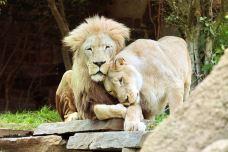 费城动物园-费城-尊敬的会员