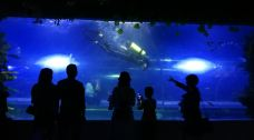 绵阳海底世界-绵阳-Yuaaa