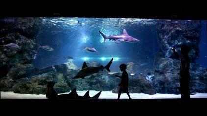 coex水族館-hana (6)