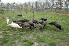 台州湾野生动物园-台州-doris圈圈