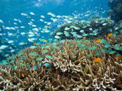 自由探索海底,巴厘岛潜水4日游