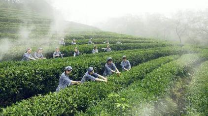 采茶节 (11)